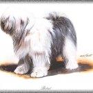 Bobtail dog canvas art print