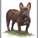 Bouledogue French Bull dog canvas art print