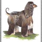 Afghan Hound dog canvas art print