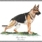 German Shepperd Berger Allemand dog canvas art print