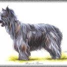 Berger des Pyrénées Pyrenean Shepherd dog canvas art print
