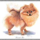 Deutscher Spitz Dog canvas art print