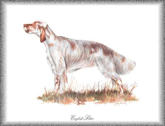 English Setter dog canvas art print