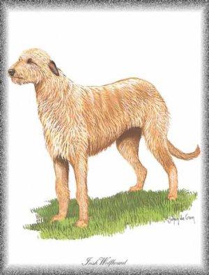 Irish Wolfhound dog canvas art print