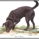 Labrador Retriever dog canvas art print