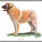 Leonberger dog canvas art print