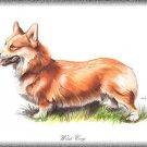 Welsh Corgi dog canvas art print