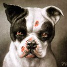 I'm a bad dog! What kind of a dog are you? canvas art print Coolidge