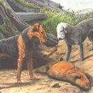Airedale & Bedlington Terrier dog canvas art print by Agassiz Fuertes