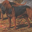 Bloodhound dog canvas art print by Louis Agassiz Fuertes