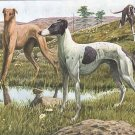 Greyhounds dogs landscape canvas art print by Louis Agassiz Fuertes