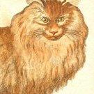 Cat feline canvas art print by Georges-Louis Leclerc Comte de Buffon
