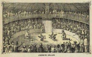 Cuba Cuban cockfight cockfighting cock rooster Juego de Gallos 1853 art print