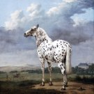 A Piebald horse equestrian painting canvas art print by Paulus Potter