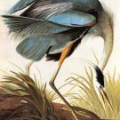 Great Blue Heron 1821 bird canvas art print by John James Audubon