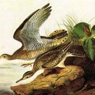 Upland Plover 1825 bird canvas art print by John James Audubon
