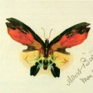 Butterfly II American West lepidoptera insect canvas art print by Albert Bierstadt