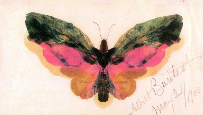 Butterfly American West lepidoptera insect canvas art print by Albert Bierstadt
