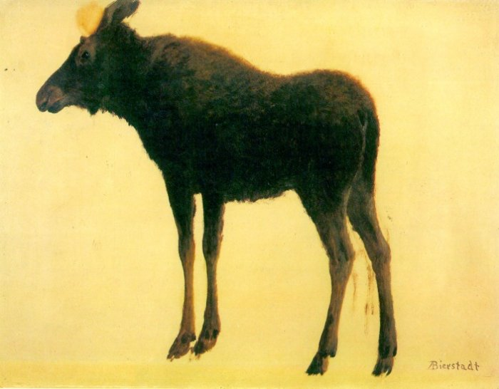 Elk or wapiti largest species of deer American wild animal canvas art print by Albert Bierstadt