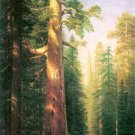 The Big Trees Mariposa Grove California landscape canvas art print by Bierstadt