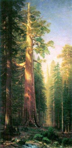 The Big Trees Mariposa Grove California landscape canvas art print by Bierstadt