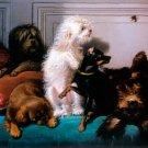 The Bumblebee c 1840 dog canvas art print by Francois Bernard