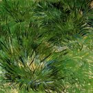 Clumps of Grass landscape canvas art print by Vincent van Gogh