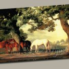 Mares Foals Beneath Large Trees Gallery Wrap canvas art print Stubbs