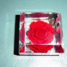 Hand Carved Colored Genuine Bircraft Originals Encased Rose #300692