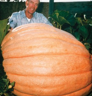 10 Organicaly Grown Dill's Atlantic Giant Pumpkin Seed
