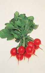 Organic Cherry Belle Radish 100 Seeds