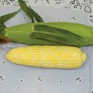 Organic Heirloom Luscious Yellow Corn 40 seeds