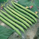 Organic Heirloom Green Snap Bush Bean 40+ Seeds