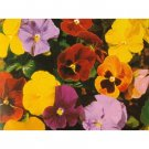 Trimardeau Giant Pansy Mix 100+ Seeds