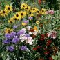 Bird and Butterfly Wildflower Seed Mix 1,000+ Seeds