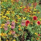 Southeast Wildflower Seed Mix 1,000+ Seeds