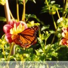 "5"" x 7"" Butterfly Photo - Item# MP57-RT2"
