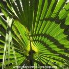 "8"" x 10"" Palms Photo - Item# MP810-KC1"