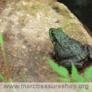 "5"" x 7"" Frog on a Rock Matted Photo - Item#: MP57-JA3"