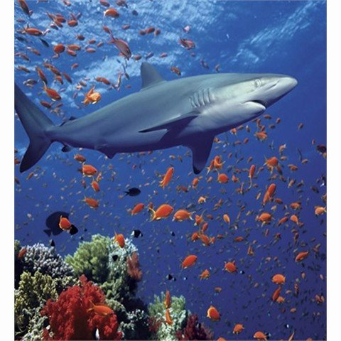 Underwater Ocean Shark Scene Bathroom Shower Curtain Ct