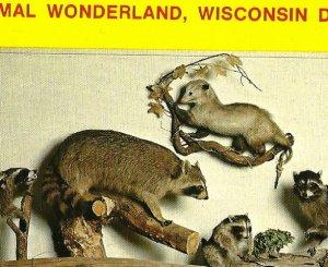 Animal Wonderland MAMMALS Wisconsin Dells postcard