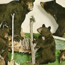 Animal Wonderland BLACK BEARS Wisconsin Dells Postcard