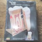 VTG LINDBERG HUMAN TOOTH MODEL 8X-SIZE ANATOMICALLY ACCURATE MODEL KIT