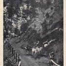 Vintage Postcard High Drive Cheyenne Canon Colorado Horse & Buggy 1909