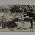 "Vintage Postcard ""Salted""  Salt on their tails early 1900's"