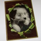 Vintage Postcard Puppy Tearing Through Paper