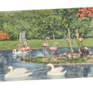 Vintage Postcard Famingo Pond Parrot Jungle Miami Florida