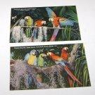 (2) Vintage Postcard Colorful Macaws Parrot Jungle Miami Florida