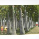 Vintage Postcard Stately Royal Palms Florida Two Girls Holding Hands