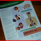 Sculptured Poster HYPERTENSION Heart Brain Kidneys Eyes & CIBA Symposia NETTER